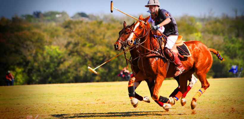 POLO-Victory-Cup-Leander-ColoredLion-1